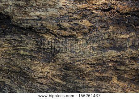 Bark Tree Texture brown bark wood backgrounds