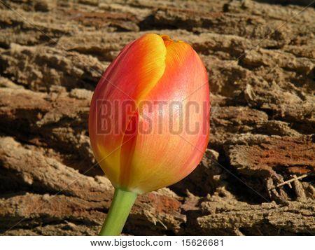 Yard Flower In Green Background