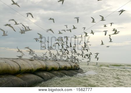 Seabirds Taking Flight