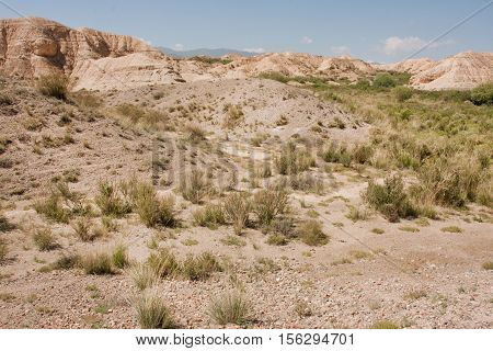 Dry land small bushes of mountain plateau in Central Asia at sunny day