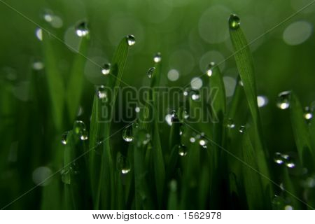 Glistening Green