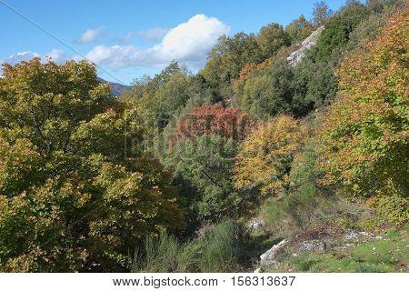 deciduous autumnal woods in Nebrodi Park, Sicily