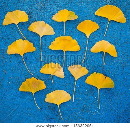 Yellow ginkgo leaves on a blue background