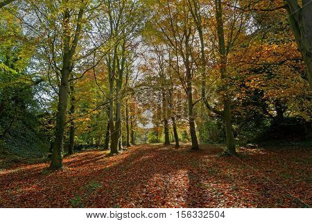 A path through the woods in Autumn