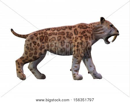 Saber-toothed Cat Profile 3D Illustration - The Saber-toothed Tiger lived worldwide in the Eocene to the end of the Pleistocene Periods.