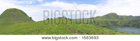 Some Cows And Buffalo On Grass Hills, Cameroon, Africa, Panorama