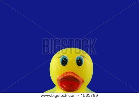 Rubber Duck In Bubbles