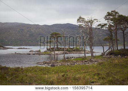 Trees at the shore of Loch Assynt Highlands Lairg Scotland