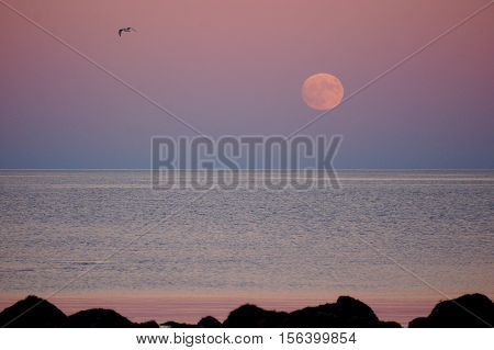 The Moon rising with a gull in background