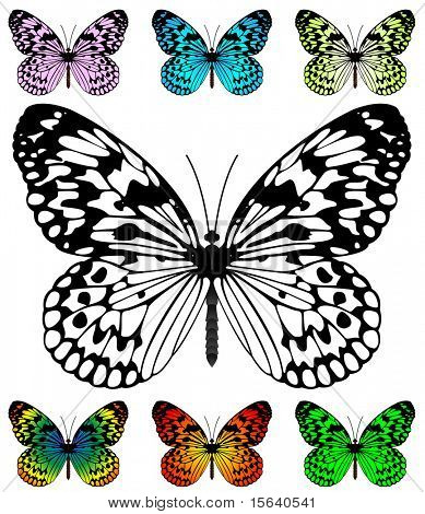 Butterfly vector template with samples. Easy editable wings color. Paper Kite or Rice Paper butterfly, Idea leuconoe species.