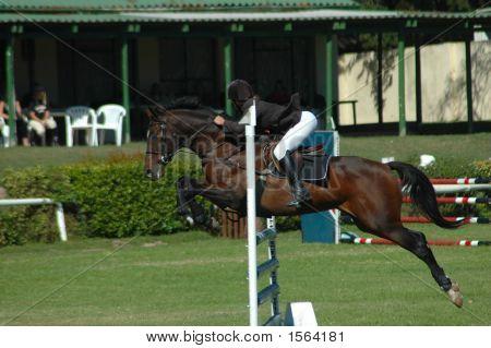 Horse Jumping Sport