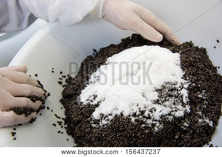 Caviar Processing Plant, Worker Mixing Sturgeon Eggs With Salt I