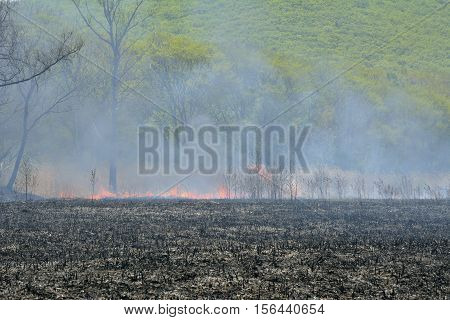 A forest fire: flame smoke ash trees.