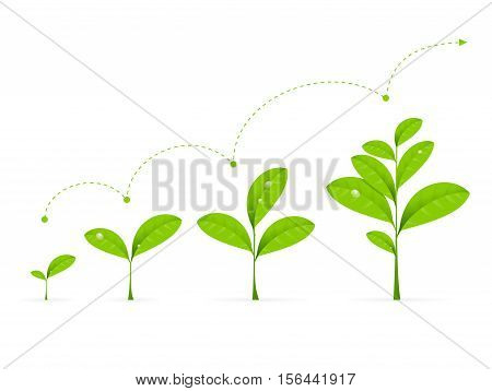Phases Green Plant Growing. Concept Development Vector illustration