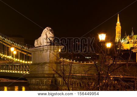 Night view of lion statue at the Chain bridge, Budapest, Hungary. Buildings of Buda part on background