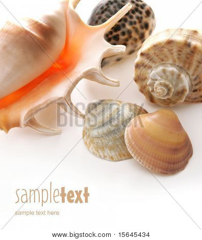 shells on white background (easy to remove the text)