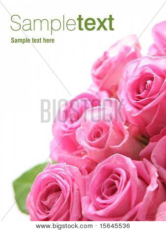 Pink rose (easy to remove the text)