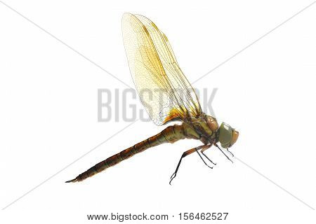 the a dragonfly isolated on a white background