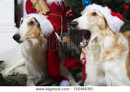 large dogs, borzois dressed as father christmas and with season greetings