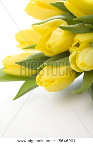 ellow tulips