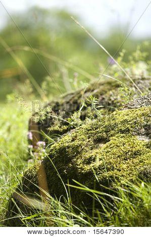 Big rock overgrown with moss