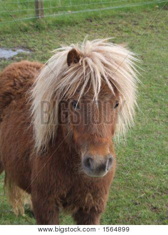 Cute Horse