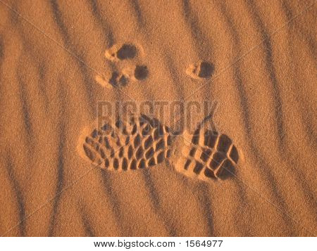 Human And Animal Prints In Sand