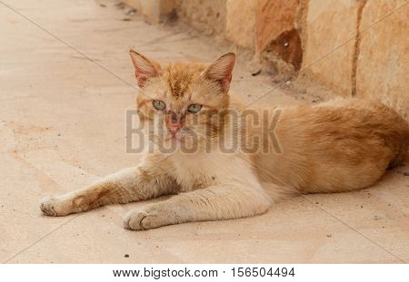 red dirty homeless cat lying on sidewalk