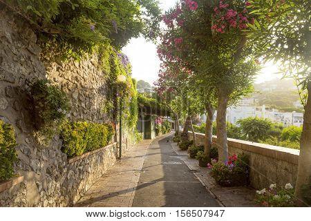 Pathway full of flowers on Capri Island Italy