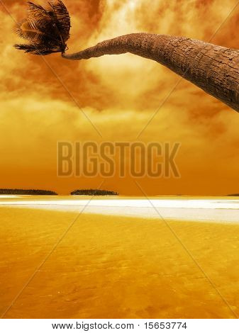 Palm agacharse Laguna