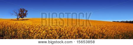 Rural Field in South Australia