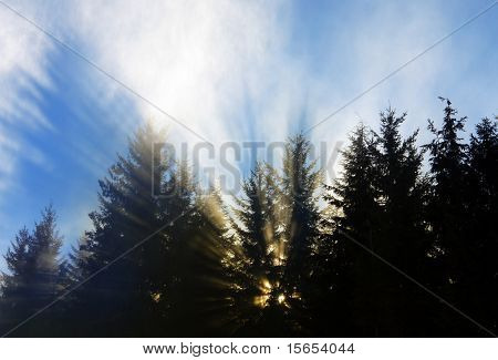 A Ray of Light pierces the Trees