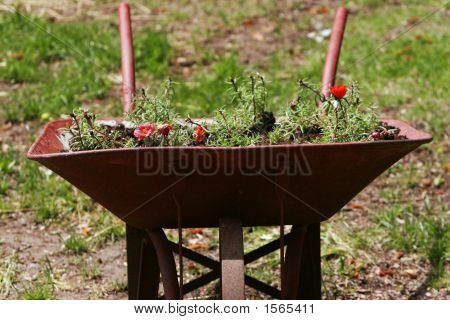 Wheelbarrow Front