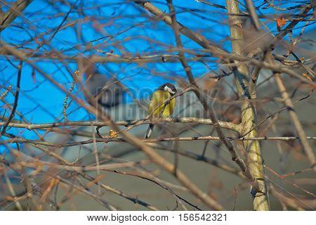 twigs and birds twig white bird wildlife nature