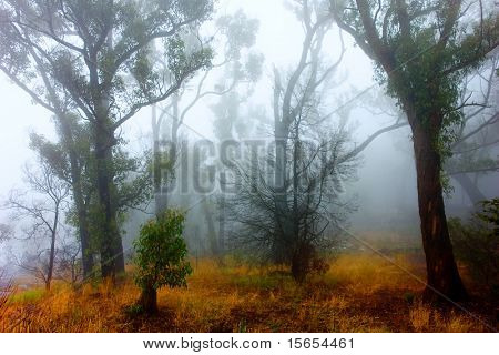 Fog surrounds Grampians Forest