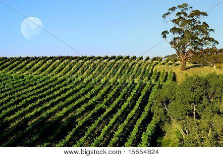 Vineyard and Moon