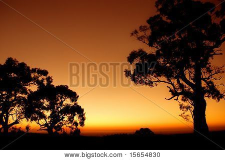 Silhouette of Tree outback Australian plains