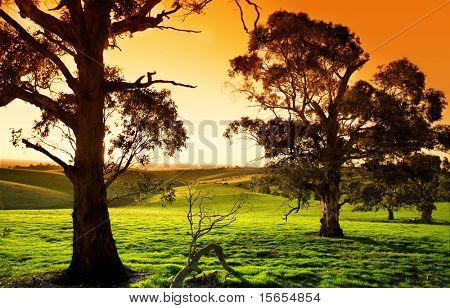 Wunderschönen Sonnenuntergang über eine grüne Wiese