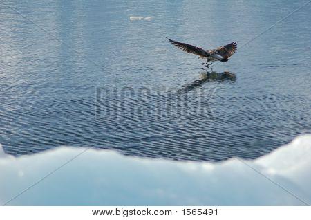 A Bird Landing On Water