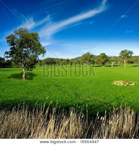 Rural landscape in the Adelaide Hills