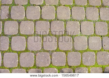 paving stones on road with moss background