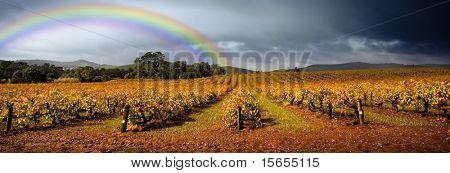 Oscuros nubarrones se ciernen sobre la viña con un arco iris en el fondo