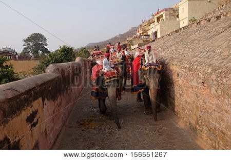 JAIPUR, INDIA - FEBRUARY 16: Decorated elephants carrying tourists at Amber Fort in Jaipur, Rajasthan, India, on February 16, 2016.
