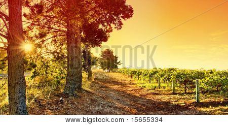 Sun sets over an Australian Vineyard
