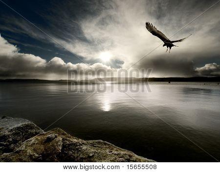 A bird flies over harbour at dusk
