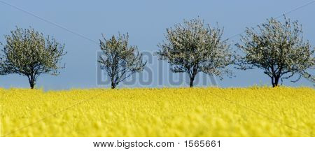 Trees (4)