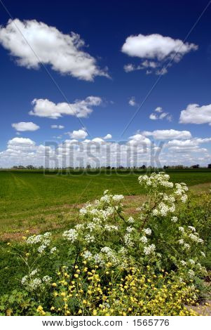 Wild Flowers, Fields, And Sky