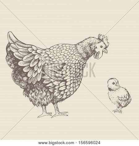 Illustration little chicken and hen. Series of farm animals. Graphics, sketch, hand drawing birds family. Brood-hen teaches chick. Vintage engraving style. Family day
