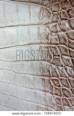 Crocodile skin, gray, yellow, made of crocodile skin. Fashion leather handbags hand-made natural pet farms, nature motifs skin textures skin backgounds