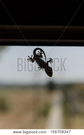 Template of a small gecko on window